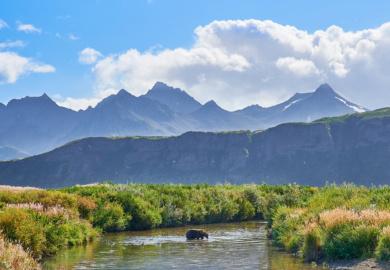 Best Alaska Bear Photography Workshop