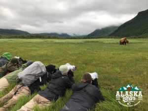 Alaska Bear Photography Workshop