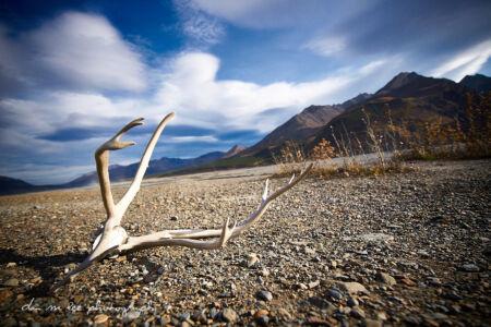Alaska Travel Photography by Dan M Lee