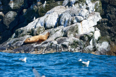 Wildlife in Resurrection Bay, Seward